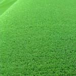 Sintelon Ковролин (в нарезку) Искусственная трава Greenland зеленый (2м)