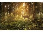 Фотообои Лесной олень 32-0006-PG Decocode