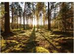 Фотообои Прогулка по лесу 41-0416-PG Decocode