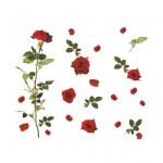 Фотообои Китайская роза 15-0488-FR Decocode