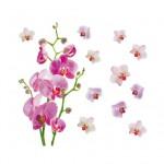 Фотообои Каттлея орхидея 15-0484-FR Decocode
