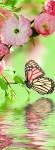 Фотообои Бабочки Б1-285 Divino