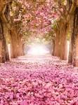 Фотообои Цветущие деревья С1-249 Divino