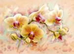 Фотообои Орхидея живопись С1-300 Divino